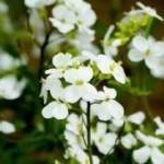 Американские учёные-генетики вырастили уникальное растение