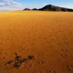 Ученый из Германии предположил, что «ведьмины круги» создают термиты