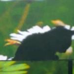 Ученые в Сингапуре разработали усовершенствованный плащ-невидимку