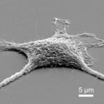 Ученые создали клетки-зомби