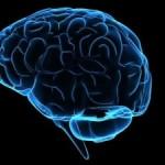 Компьютерные игры способствуют увеличению мозга