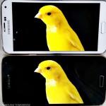 Samsung рассказала подробнее о WQHD-экране смартфона Galaxy S5 LTE-A