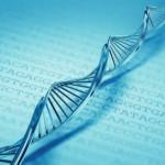 Ученые: только 8% ДНК человека несут пользу, остальное — «мусор»
