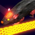 Лазеры и углеродные нанотрубки: новое слово в исследовании мозга