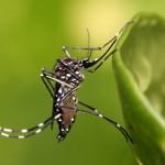 Лихорадка денге наступает на Европу