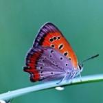 Начаты работы над созданием бабочек-киборгов