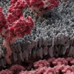 Вирус Эбола - биологическое оружие?