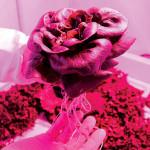 Ученые нашли способ, как выращивать салат на Марсе и Луне