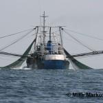 Google поможет почти в реальном времени выявлять нелегальную рыбную ловлю на планете