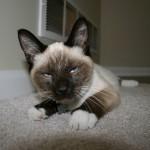Почему кошки — это безжалостные убийцы