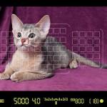 Что умеют камеры Canon PowerShot G7X и EOS 7D Mark II?