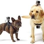 Квартальные доходы GoPro ставят рекорды благодаря продажам новых моделей