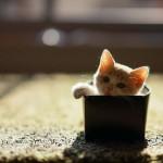 Почему кошки так любят картонные коробки?