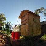 Австралийский улей позволяет добыть мед, не беспокоя пчел
