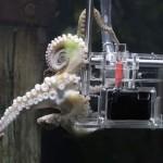 Первый в мире осьминог-фотограф