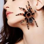 Почему люди так боятся пауков?