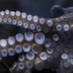 Sony научила осьминога фотографировать туристов