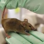 Ученые опровергли эффект омолаживающего белка