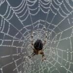 Паук + графен = сверхпрочная паутина
