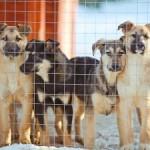 Завод в Екатеринбурге начал выпуск протезов для собак