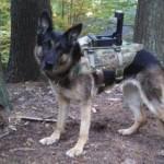Cerberus - система, которая превращает в киборгов служебных собак