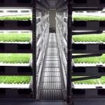 Первая в мире полностью роботизированная сельскохозяйственная ферма начнет функционировать в Японии ...
