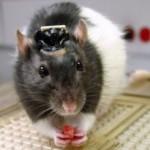 Создан имплантат, позволяющий живым существам видеть в инфракрасном диапазоне